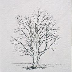 Beech tree Hand Drawn, White