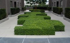 Boxwood Garden, Topiary Garden, Garden Plants, Plant Design, Garden Design, Landscape Architecture, Landscape Design, Modern Planting, Architectural Plants
