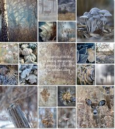 moodboard fall by AT - Cool blues and greys with leaves, pumpkins, frost, dried flowers, and deer. Autumn Inspiration, Color Inspiration, Colour Schemes, Color Combos, Mood Colors, Colours, Collages, Images Murales, Color Collage