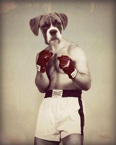 """Собака Искусство, антропоморфный, животных Руководитель, Боксер Искусство, Mixed Media Коллаж, животных Фотография, Веселые подарки, Спорт Фотография, """"The Champ"""""""