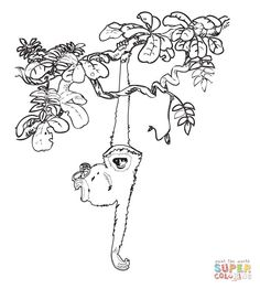 Rainforest Animal Coloring Book Pages