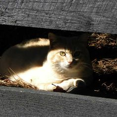 Do Your Cats Love the Sunshine? | Catster