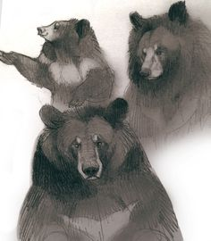How Artists See Animals Animal Sketches, Animal Drawings, Cool Drawings, Character Design Tips, Moon Bear, Bear Character, Bear Drawing, We Bear, Fanart