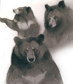 moon bears