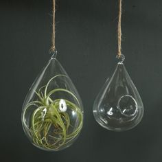 These hanging tear Drop terrariums add style and grace, depending on what is put  in them.  Designed to hold greenery or small tea light  candles, these wonderful decorations are among our most popular  products At Small Things After All, These hanging terrariums may be hung inside or out. They may be hung as individual decorative accents or used in a  group-both with spectacular, though understated, effect.  Hang one above  the kitchen sink or above a plant display, or hang a grouping ...