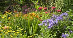 Stauden sind aus dem Garten nicht wegzudenken. Hier erfahren Sie alles rund um die große Pflanzengruppe der Gartenstauden.
