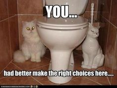 Funny Animal Of The Day - 20 photos - Morably