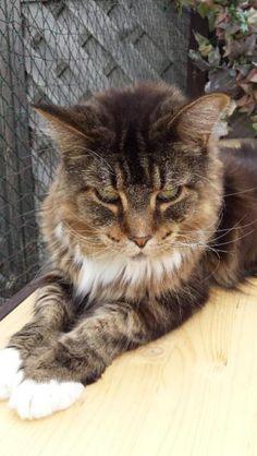 Hallo Ihr lieben Katzenliebhaber, ich mußleider meinen Enrique wegen Futterumstellunga b g e b e n . Er h a t e i n eBauspeicheldrüsenentzündung und benötigtvon daher ein spezielles Futter von Kattovit(Feline Diet) Gastro Magen-Darm. (BeiFressnapf zu kaufen) Da ich weitere Katzenhabe, (18) die dieses Futter nicht bekommen, mußich Enrique immer weg sprerren, damit er nichtan den anderen Katzenfutter schleckkert! Dasist für ihn dann immer Streß! Auch unsere Kitten müssen immer am normalen…