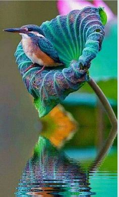 Find and save ideas about Colorful birds, Pretty birds, Beautiful birds and Tropical birds. Nature Animals, Animals And Pets, Cute Animals, Funny Animals, Pretty Animals, Forest Animals, Wild Animals, Exotic Birds, Colorful Birds