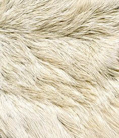 Texture, Nature. Aniamls have fur in nature and different animals have different textures in their fur.