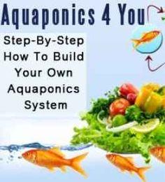 Aquaponics - Watch the video showing a small aquaponics system