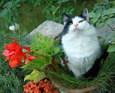 20 Cute Cat-Plants You Shouldn't Water I Love Cats, Cute Cats, Funny Cats, Pretty Cats, Cat Flowers, Flower Pots, Cat Plants, Mean Cat, Rose Trees