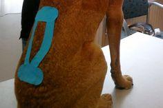 Hundetaping! Entlastung des Rückens.