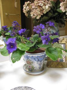 african violets (Saintpaulia). Completely nontoxic to pets and people. Some lists say they're easy to grow, but others vehemently disagree. Plants are the Strangest People gives them a difficulty rating of 6.7. I have one I got from mom. We'll see if it lives.
