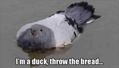 Throw the damn bread already!