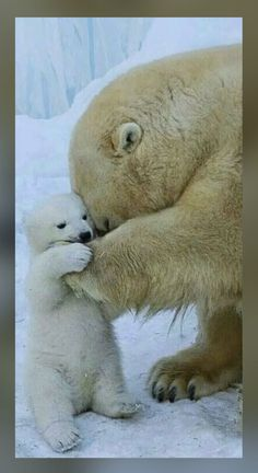 So cute! Trying to save polar bears... Cute Baby Animals, Animals And Pets, Funny Animals, Wild Animals, Beautiful Creatures, Animals Beautiful, Love Bear, Mundo Animal, Tier Fotos
