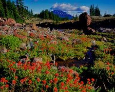 The Three Sisters Wilderness Area in Bend, Oregon.  When in town you can even catch a ride with a sled dog team of huskies up on Mt. Bachelor.  Moral of the story visit Bend!