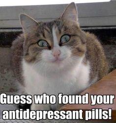 The opposite to grumpy cat