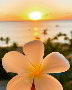 sunset in Maui Flower Phone Wallpaper, Summer Wallpaper, Beach Wallpaper, Wallpaper Pictures, Beautiful Landscape Wallpaper, Beautiful Flowers Wallpapers, Beautiful Landscapes, Aesthetic Photography Nature, Nature Photography