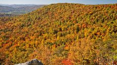 Gorgeous Color in the High Country Fall Images, State Forest, Picnic Area, We Fall In Love, Blue Ridge Mountains, Photo Contest, Scenery, Country, Travel