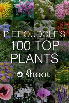 Piet Oudolf is a world-famous garden designer, nurseryman and writer. In 2013, he singled out the 100 plants he won't do without and we have them all listed for you here in Shoot.  #GardeningDesign