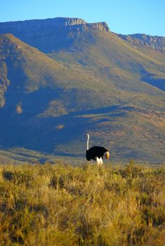 South Africa's Karoo National Park