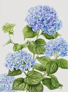 Espero no ser muy pesada con las láminas de botánica, pero está claro que me gustan.   Enlace:   http://www.bestbotanical.com/Best-portfolio...
