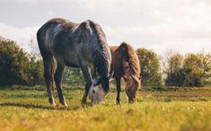 Spring Pasture Precautions | Your Horse Farm