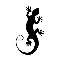 Drawings of Geckos http://members.telecable.at/mahler/fotos/