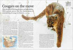 Wildlife stories of the year: Canadian Geographic Magazine