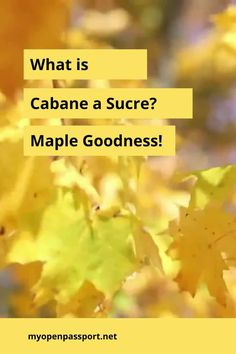 This article dives into what Cabane a Sucre is and why it should be on your travel to do list especially when you travel to Quebec province, Canada! #maplesyrup #freshmaple #organicmaple #foodincanada #foodinquebec