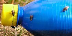 Quanto tempo o lixo nosso de cada dia demora para se decompor no ambiente?