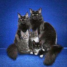 Photo de Famille ............ Chats