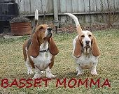 Basset Momma dog blog