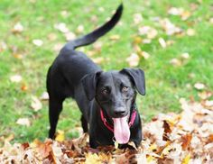 If your dog excitedly wags their tail, it means they're happy to see you, right? Not necessarily. Ac... - iStock/Willowpix