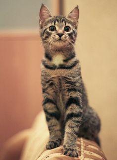 Playful look!