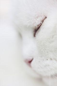 white cat by Loralay Lara Dolinšek//