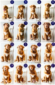 I wanted to document how our puppy grew so I took a photo of Finnleigh every week for the first couple of months.