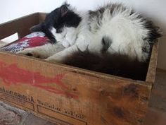 A sleeping cat in an old wooden crate : )