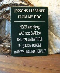 Lessons I learned from my dog..