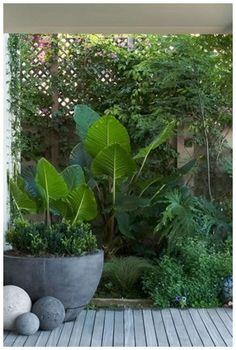 30 Tropical Garden Plants Ideas For You Home Decor. Plantas enormes y maravillos… 30 Tropical Garden Plants Ideas For You Home Decor. Huge and wonderful plants for my garden Small Courtyard Gardens, Small Courtyards, Back Gardens, Outdoor Gardens, Courtyard Ideas, Atrium Ideas, Modern Courtyard, Courtyard Design, Little Gardens