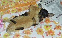 De sötaste men mest oväntade djur som blivit vänner med varann :3