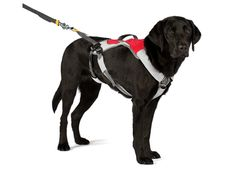 Ruffwear Omnijore Joring System for Dog-Pulling Activities