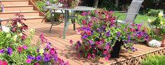 Como Proteger Flores e Plantas Do Calor - Cuidar de plantas exige um tratamento bem especial. Você não deve apenas colocar as plantas em vasos ou diretamente na terra e manter a areia sempre úmida achando que sua planta estará bem alimentada e feliz. Isso é um erro que a maioria das pessoas comete e essa mesma maioria pode até ter um jar... - http://www.ecoadubo.blog.br/ecoblog/2015/02/03/como-proteger-flores-e-plantas-do-calor/
