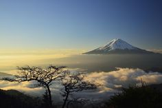 Bonsai Fuji - When I stand on the mountain pass, was a Fuji floating in the sea of clouds there. Tree of a strange form of one stood as bonsai.