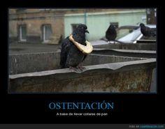 OSTENTACIÓN - A base de llevar collares de pan   Gracias a http://www.cuantarazon.com/   Si quieres leer la noticia completa visita: http://www.estoy-aburrido.com/ostentacion-a-base-de-llevar-collares-de-pan/