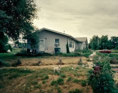 """American Poverty - A puppy wanders through a neighborhood in Eagle Butte, S.D. that locals call the """"dark side"""" because none of the street lights work, but also because loitering, drunkenness, fights and domestic abuse are common occurences, especially at night."""