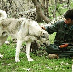 Peshmerga with his Kurdish breed dog Kangal 🌹🌹🌹🌹🌹🌹🌹🌹🌹🌹🌹🌹🌹🌹🌹 #kurdistanhistory #kurdish #kurdistan #kurd #peshmarga #ararat #peshawaqazi  #mediaempire #elamites #hittites #zardasht #hawler #kermashan #newroz #kingdiyako #kobani #elam #yezedi #lur #zarathustra #mesopotamia #history #civilazation #laki #greatkurdistan #karda #peshmarga  #kangal #gudea #kurdistanflag  #kurdishKangal