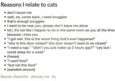 Well then... it would seem that I am a cat. That would explain a lot actually...