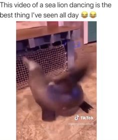 Funny Animal Jokes, Funny Animal Pictures, Cute Funny Animals, Animal Memes, Funny Cute, Funny Dogs, Hilarious, Crazy Funny Memes, Really Funny Memes